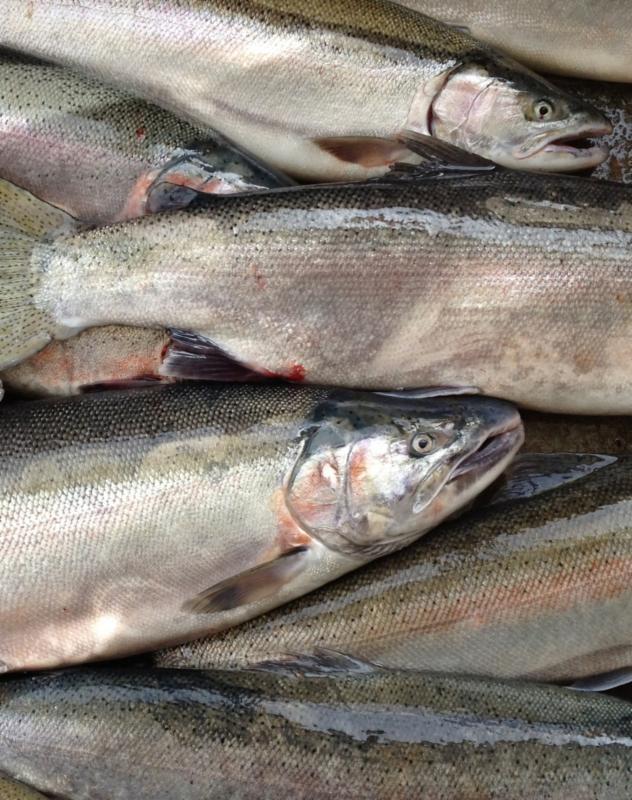 Washington state fish farmers artisans for Washington state fish