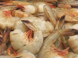 Florida White Shrimp