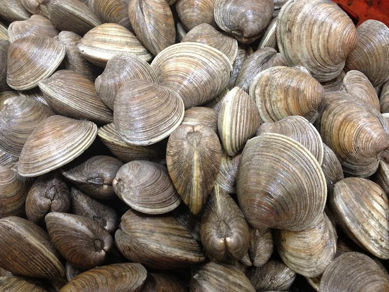 clams3.png